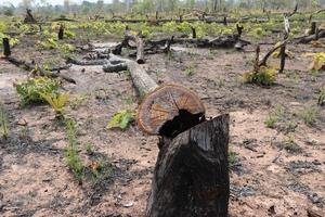 Điều tra, xử lý nghiêm vụ phá rừng tại xã biên giới Ia Mơ