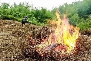 Báo động tình trạng cháy rừng