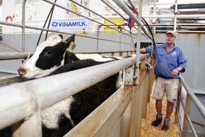 Vinamilk tiếp tục nhập hơn 1.600 con bò sữa HF và A2 từ Mỹ