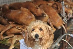 Bản tin Tiêu dùng 17/9: Hà Nội không bán thịt chó từ năm 2021; Ẩn họa sau những chiếc cốc nguyệt san giá siêu rẻ