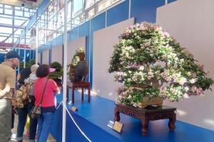 Thêm cơ hội phát triển nghề Bonsai cho các nghệ nhân Bonsai Việt