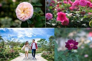 Vượt biển khám phá Vương quốc hoa hồng – trải nghiệm mới cực ngọt ngào tại Nha Trang