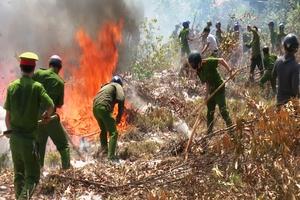 Quảng Trị cháy gần 11 ha rừng tràm và thực bì