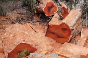 Phát hiện thêm vụ phá rừng nghiêm trọng tại Quảng Bình
