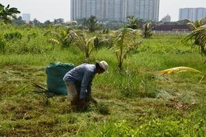 Làm nông nghiệp trên đất vàng sát trung tâm Sài Gòn