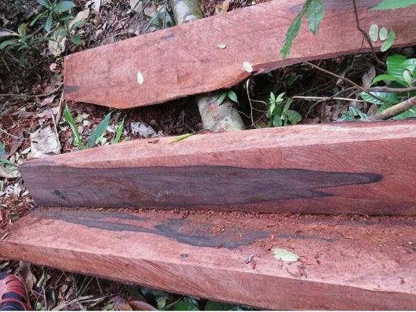 """Hiện trường còn lại tại khu vực một cây gỗ mun sọc bị """"lâm tặc"""" triệt hạ và xẻ thịt."""