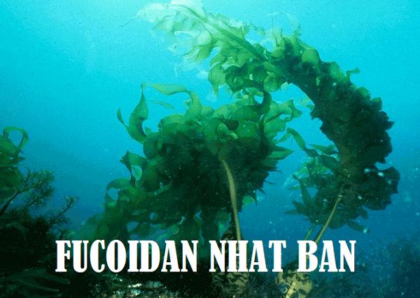 Fucoidan – Một hợp chất tuyệt vời từ các chất nhờn trong các loại tảo của Nhật Bản