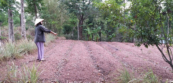 Hộ Bà Nguyễn Thị Vui (có diện tích hơn 4000m2) bức xúc chỉ trên lô đất canh tác có giấy tờ đầy đủ mà sao họ bồi thường giá rẻ không đủ suất ăn sáng.