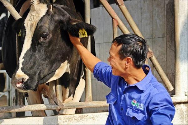 Nhiều nông dân nuôi bò sữa mạnh dạn đầu tư tiền tỷ để xây dựng dây chuyền xử lý chất thải tự động