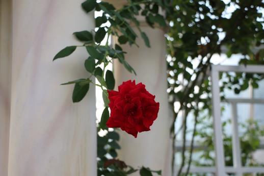 D:\00_0219\1906_VP_CHien dich he\ANH VP\Vương quốc hoa hồng\IMG_1582.JPG