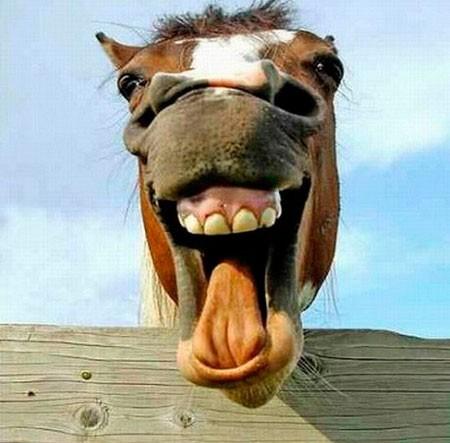 nụ cười, mỉm cười, động vật