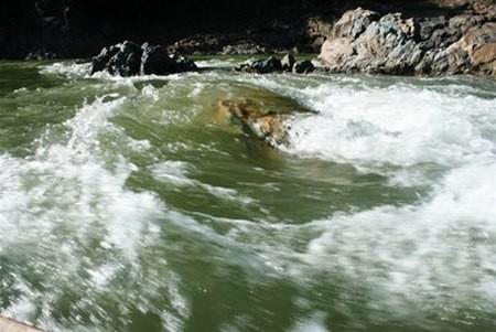 Gặp CSGT nhảy xuống sông Đà bắt trùm ma túy