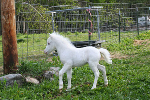 Xinh xinh động vật trắng tinh