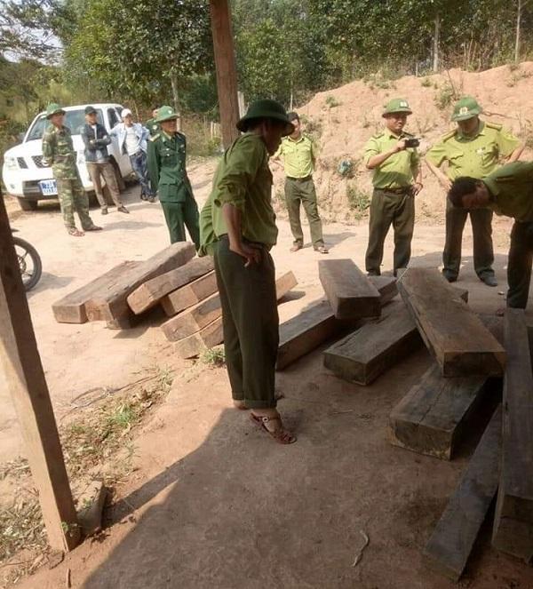 Cơ quan chức năng thu giữ gỗ mun khai thác trái phép tại Phong Nha