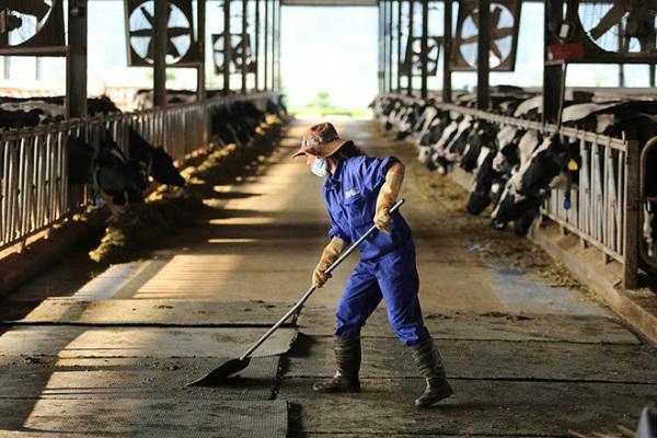 Mộc Châu Milk đang từng bước xây dựng đề án Nhà máy xử lý chất thải toàn vùng chăn nuôi bò sữa