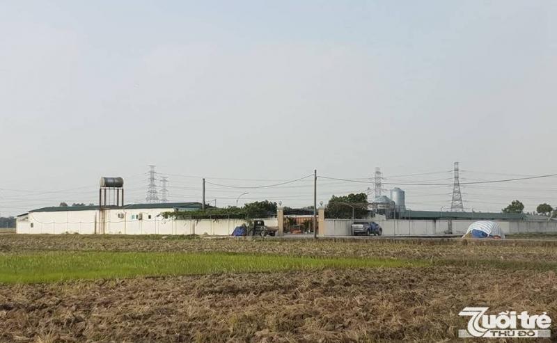 Công ty Cổ phần giống gia cầm Ngọc Mừng chưa được phê duyệt dự án nhưng đã xây dựng và đi vào hoạt động từ lâu.