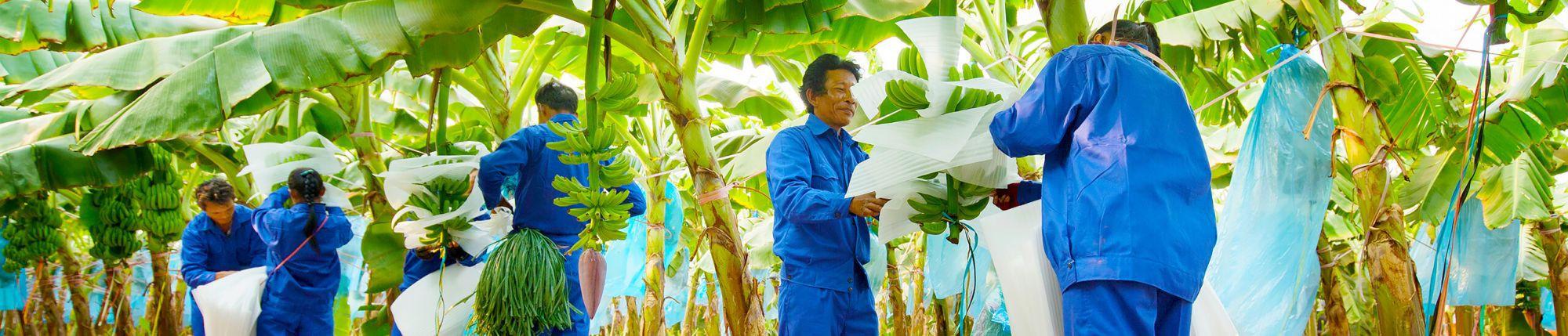 THACO vừa trở thành cổ đông lớn, một sếp THACO được bầu làm Phó Chủ tịch HAGL Agrico  - Ảnh 1.
