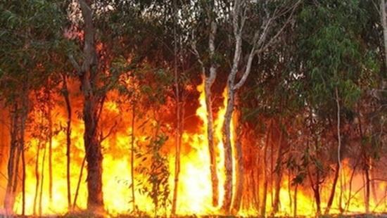 Nắng nóng diện rộng, nguy cơ cháy rừng ở Trung Bộ tăng cao