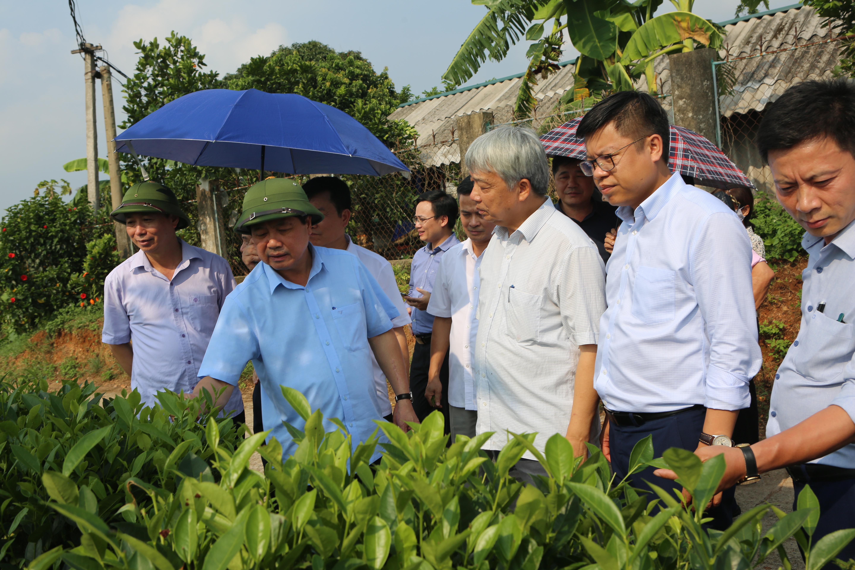 Ông Nguyễn Hữu Tài - Chủ tịch Hiệp hội chè Việt Nam cùng đoàn đại biểu thăm mô hình sản xuất chè tại xã Tân Cương, thành phố Thái Nguyên.