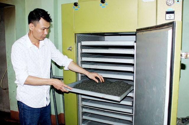 Người dân xóm Hồng Thái 2, xã Tân Cương (TP Thái Nguyên) chế biến chè trung du.