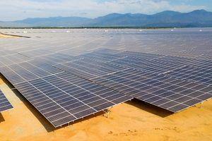Đầu tư điện mặt trời: Đấu thầu dự án là tối ưu