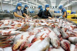 Nguy cơ đứt gãy chuỗi cung ứng cá tra: Doanh nghiệp càng thêm khó