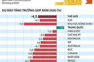[Infographics] OECD dự báo GDP toàn cầu năm 2020 giảm 4,5%