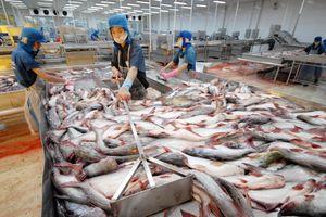 Cập nhật cổ phiếu VHC: Xuất khẩu tháng 11 giảm nhẹ do tắc nghẽn tại Trung Quốc