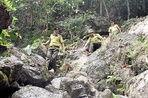 Lâm Bình (Tuyên Quang):  Nhiều kết quả nổi bật trong công tác quản lý, bảo vệ rừng và phát triển lâm nghiệp
