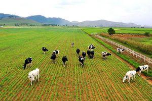 """VDSC: Ngành chăn nuôi (Phần 1) - Mô hình 3F sẽ giúp doanh nghiệp thức ăn chăn nuôi Việt ít """"lép vế"""" trên sân nhà"""