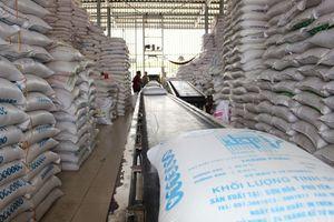 Hồi hộp mở thầu gạo dự trữ quốc gia