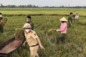 Hà Tĩnh: Các lực lượng ra quân gặt lúa giúp dân tránh bão