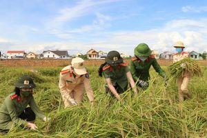 Quảng Bình: Lực lượng Công an xuống đồng giúp người dân thu hoạch lúa giữa lúc giãn các xã hội