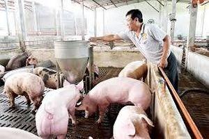 Chăn nuôi Mitraco ghi nhận doanh thu quí III tăng trưởng mạnh