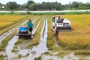 Tập đoàn Lộc Trời (LTG): Nỗ lực hoàn thiện chuỗi giá trị nông nghiệp