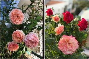 Ngắm khu vườn rực rỡ của người phụ nữ luôn ước mơ có một căn nhà đầy hoa