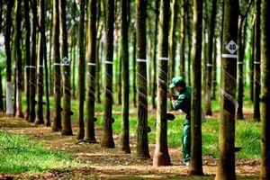 Cao su Phước Hòa (PHR) công bố kế hoạch kinh doanh quý 3/2021 thấp