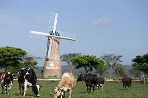 Đầu tư phát triển cả quy mô lẫn công nghệ, hệ thống trang trại Vinamilk tăng trưởng ấn tượng