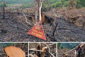 Quảng Bình: Huyện Minh Hóa chỉ đạo xử lý việc gần 3,5 héc ta rừng tự nhiên bị tàn phá