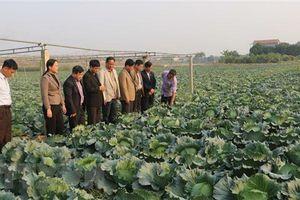 Tái cơ cấu ngành nông nghiệp để ứng phó với dịch bệnh, thiên tai